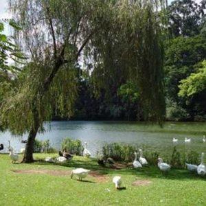 Villa Ibirapuera Lavvi Cyrela – Moema Preço Planta